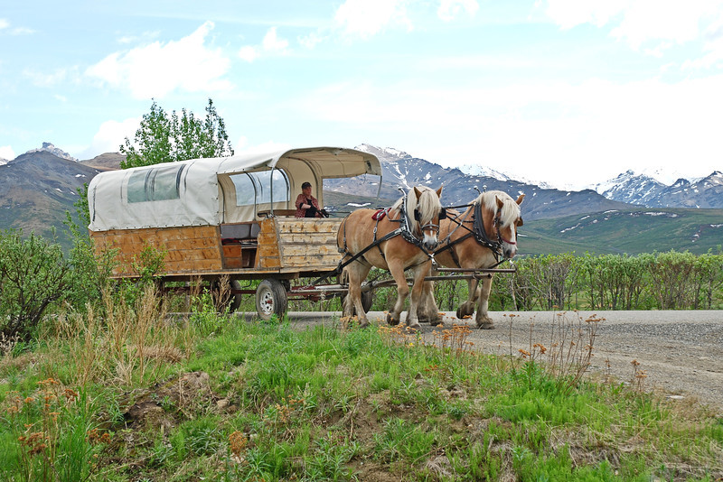 Cover wagon ride in Denali