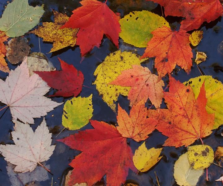 leaves floating IMG_7258.jpg