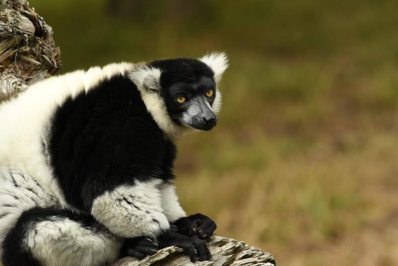 2016_San_Francisco_Zoo_July_ 0018.JPG