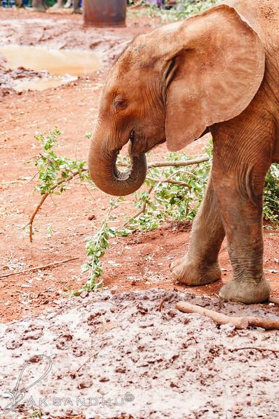 Safari-Africans-163.jpg