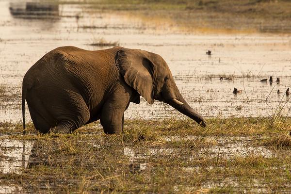 Nature 2015 Elephant