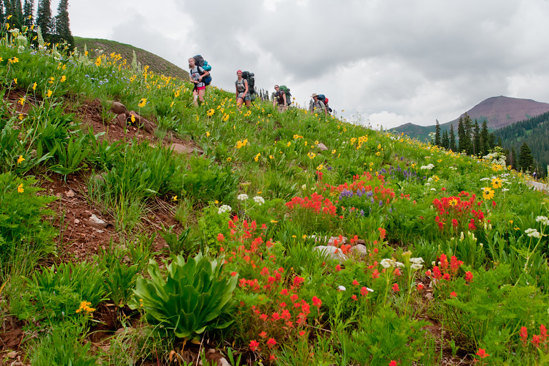Photogenic family backpacking through Indian Paintbrush and Asters in an alpine meadow near Crested Butte, Colorado.