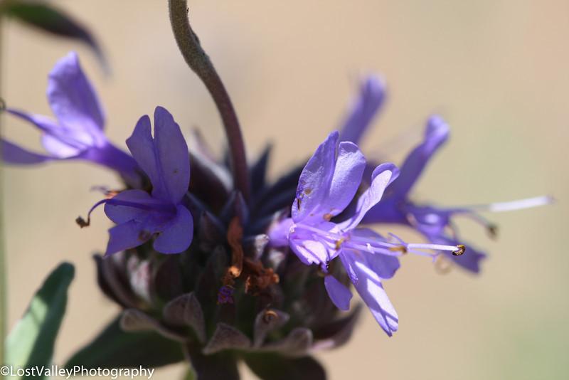 Flora-0296.jpg
