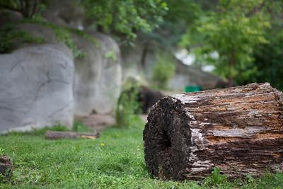 2010-06-06 Detroit Zoo