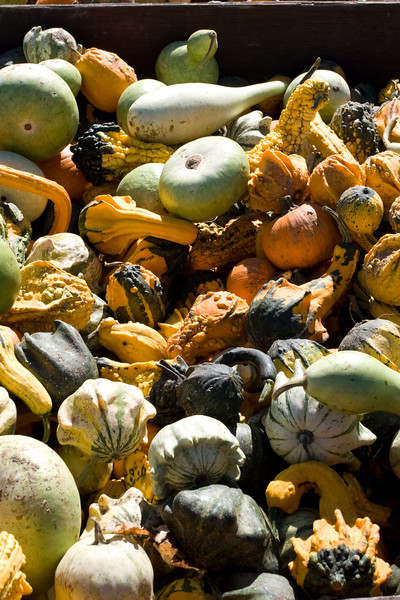 Shapely Gourds