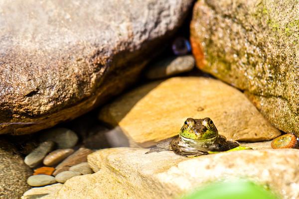 Fish, Reptiles & Amphibians