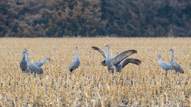 Crane18-1403.jpg