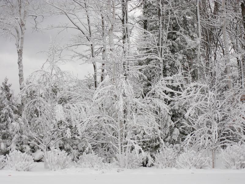 20091209_blizzard_011-7.JPG
