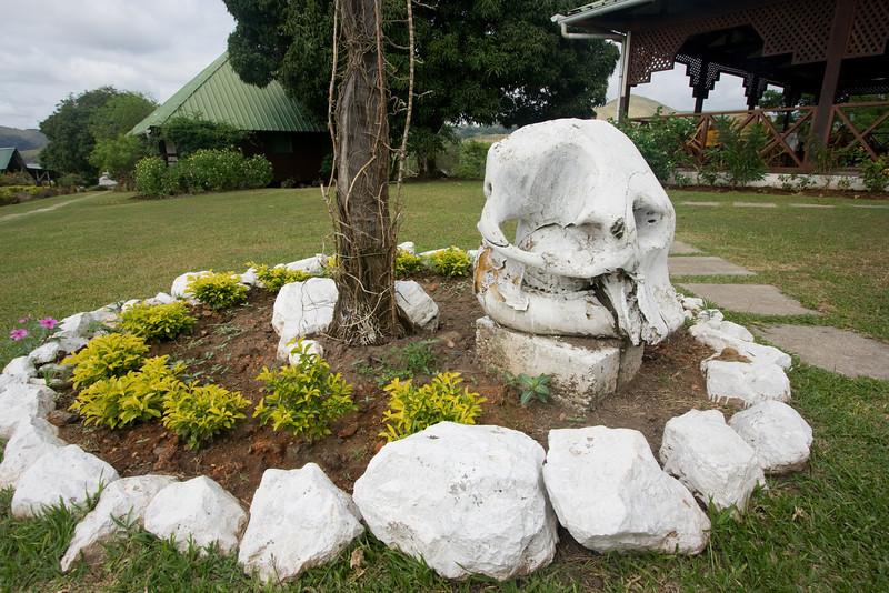 Elephant skull.