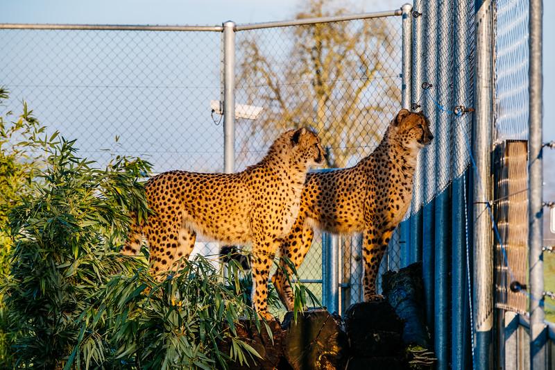 Tonis Zoo-0198.jpg