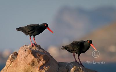 Birds of Rooiels