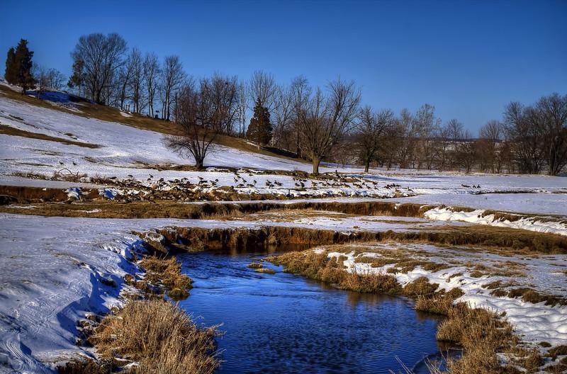 snow - canadian geese east earl creek(p, 217).jpg