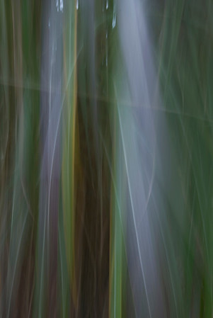 Grass  (abstracts)