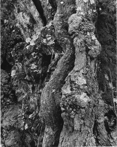 Paca-House-Tree-1.jpg