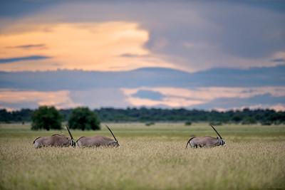 Botswana Green Season 2014