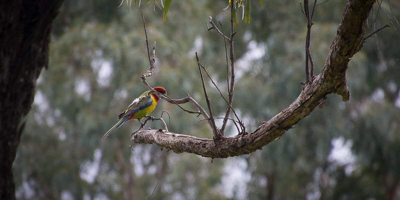 Diamond Creek, Victoria