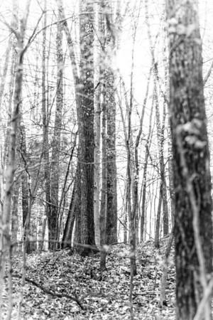 Clifton Doyle Trail
