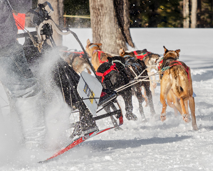 91st World Championship SledDog Derby