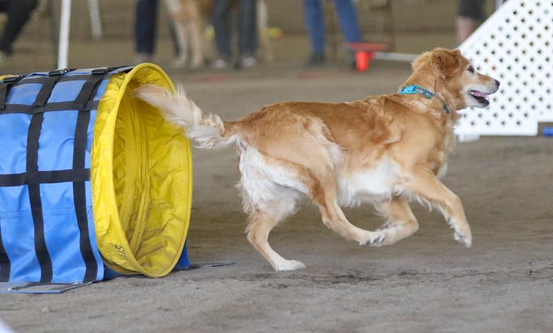 3-15-2015 Bloodhound-1539.jpg