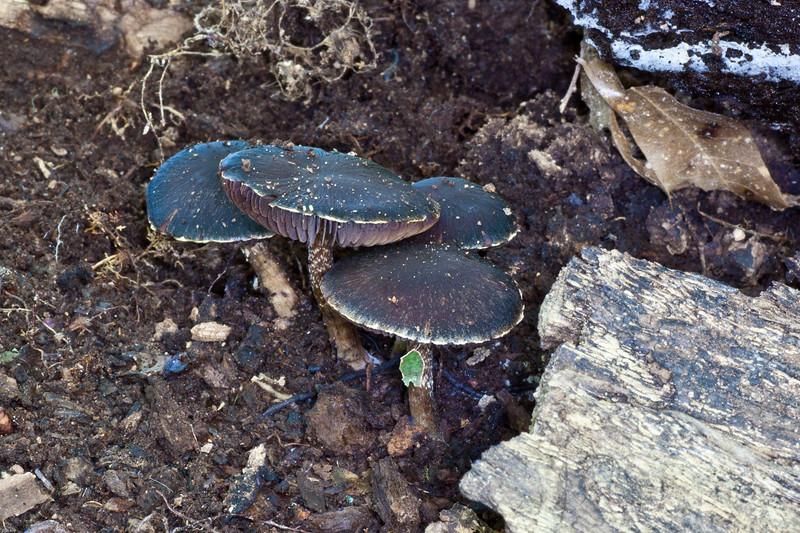 dark mushroom 100611.jpg