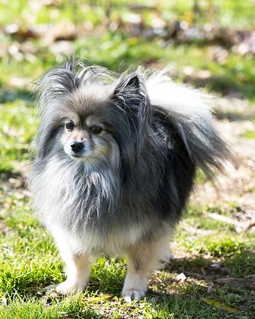 Middleburg Humane Pups 11-22-17
