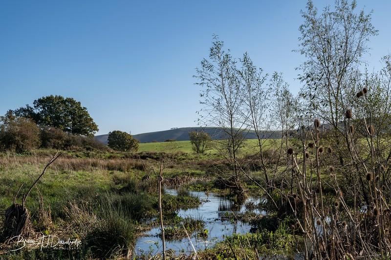Woods Mill-5344.jpg