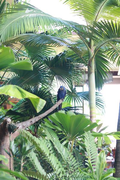 Kauai_D5_AM 223.jpg