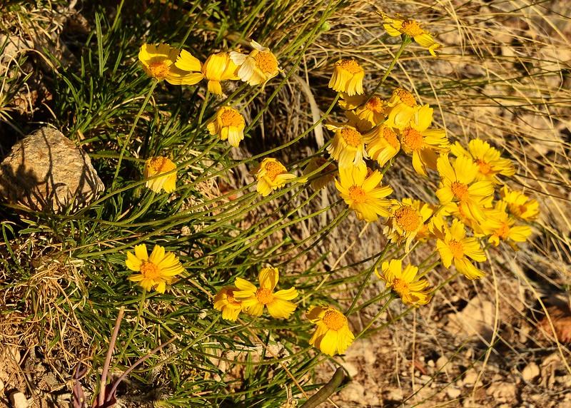 NEA_0830-7x5-Flowers.jpg