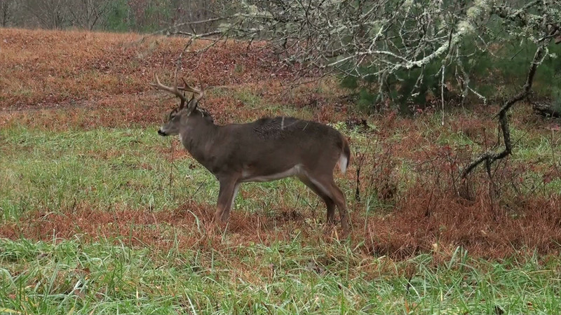 whitetail_2920_01_sony_audio.mov