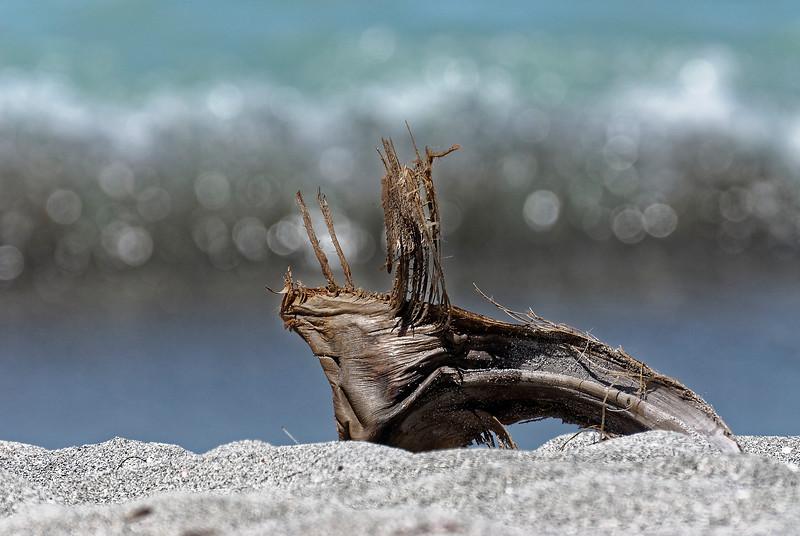 Palm Art - Siesta Key Florida