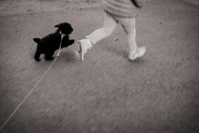 leena-puppy-walk-geox-fujifilm-x100s-tclx100-1.jpg