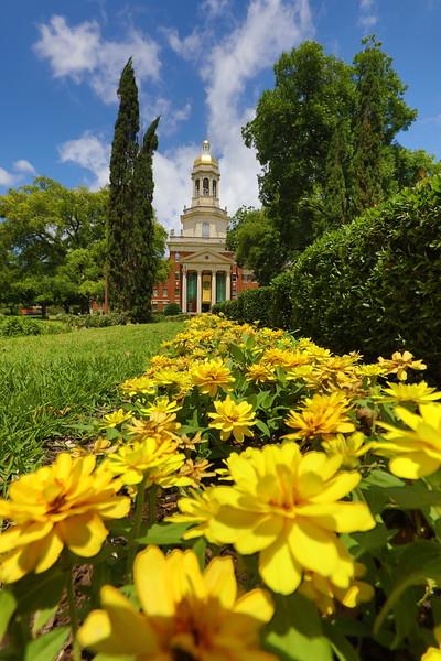 Pat Neff Hall - flowers, Spring