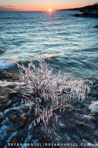 Ice Leafs and Sunset