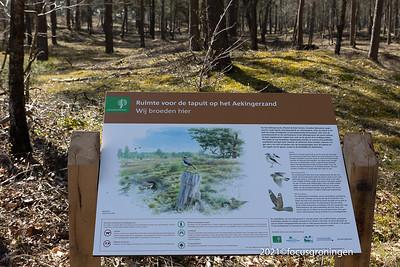 Natuurgebied Drents-Friesewold - Aekingerzand