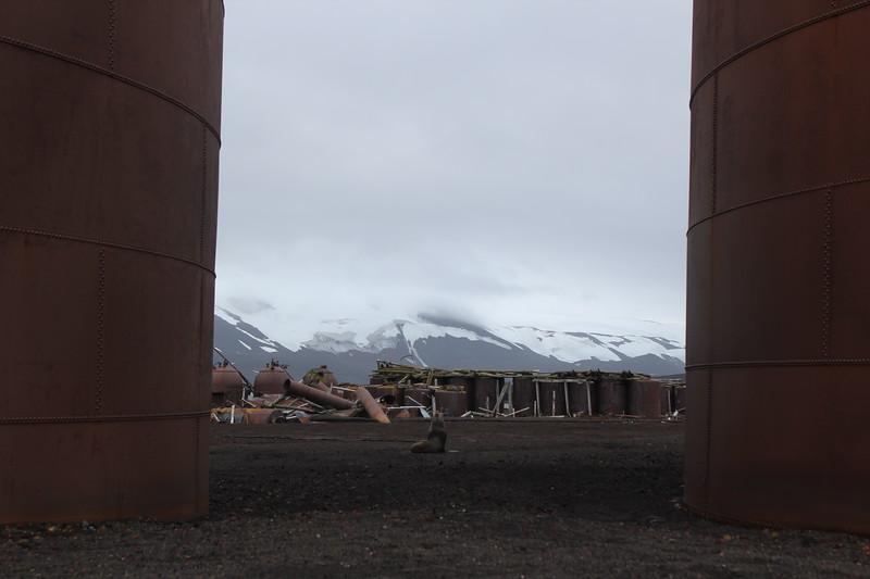 Antarctica 079.JPG