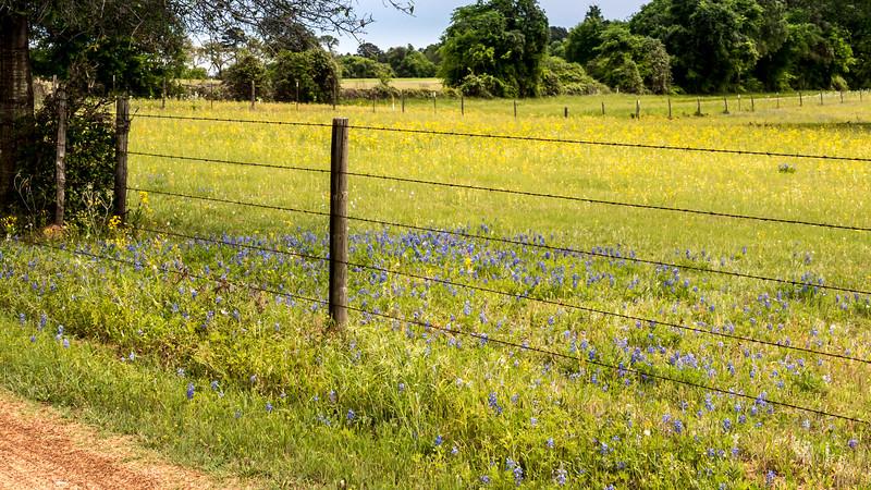 Texas Spring-0658.jpg