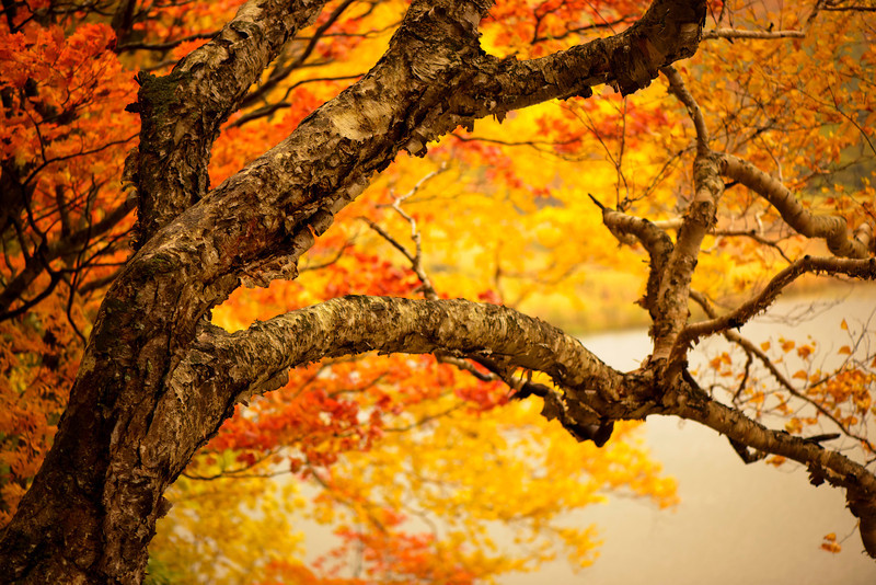 Fall's Reach