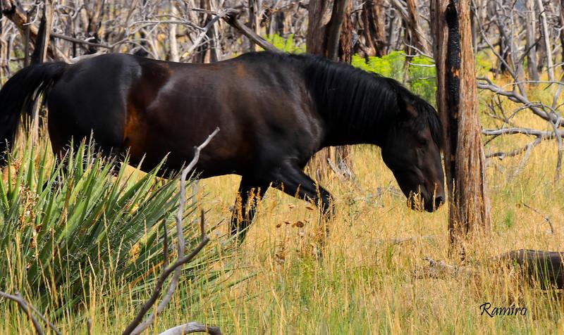 Wild Horse IMG_5322.jpg