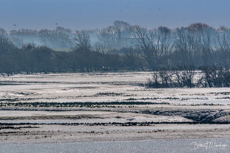 Low Tide reveals the mud-flats at Pagham Harbour