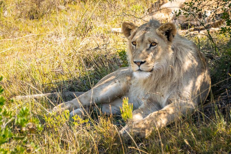 2019-02-05-Zuid-Afrika-2608.jpg