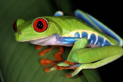 Costa Rica (Caribbean lowlands)