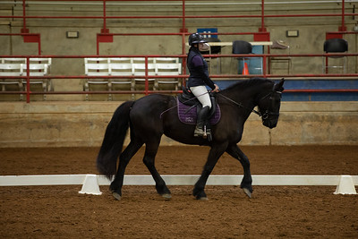Horse 298
