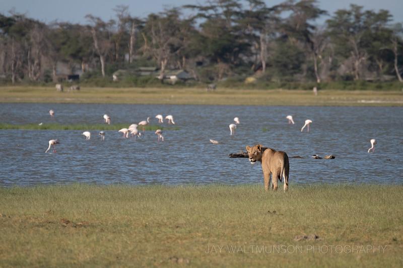 Jay Waltmunson Photography - Kenya 2019 - 165 - (DSCF5025).jpg
