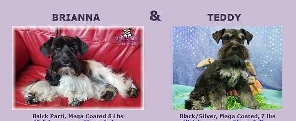 Brianna & Teddy Puppies, DOB 6/21/2021