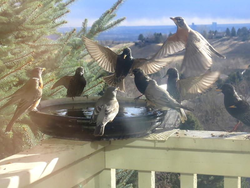 birds (182).jpg