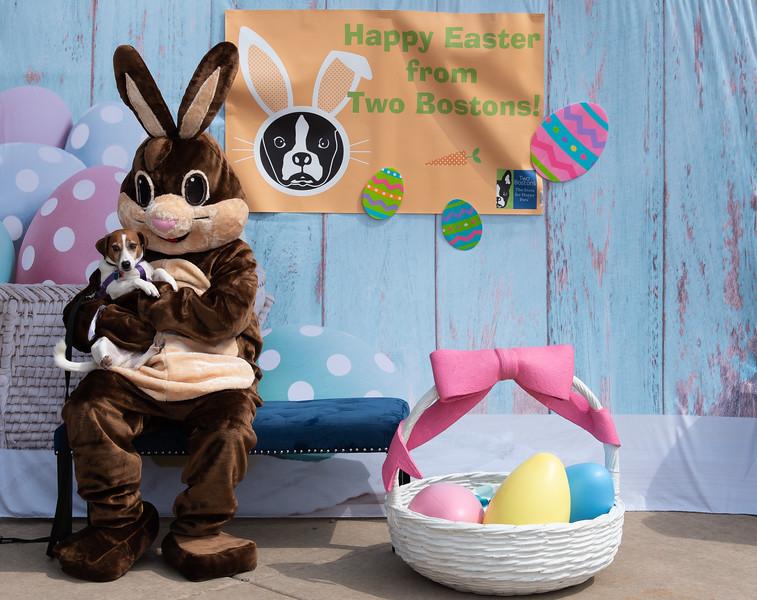 Easter2019TwoBostons-8235.jpg