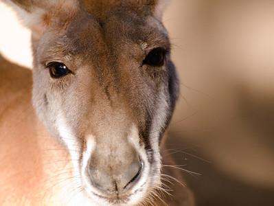 Los Angeles Zoo: Small Animals