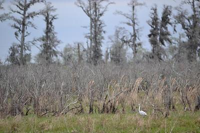 2012_02 - NewOrleans, LA - Swamp