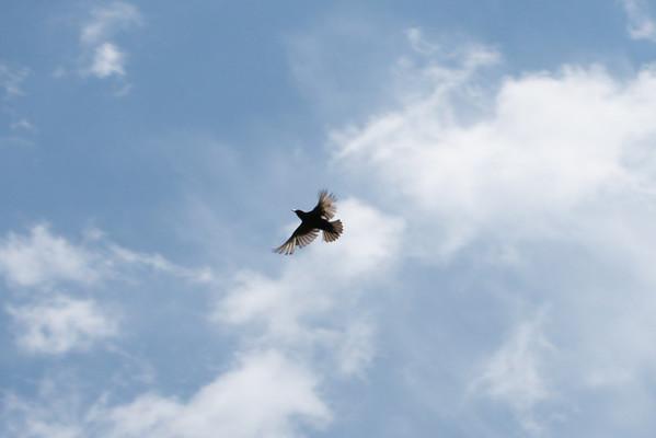 Birds Summer 2008