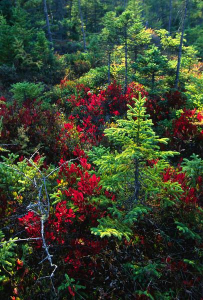 Pine Marsh New.jpg